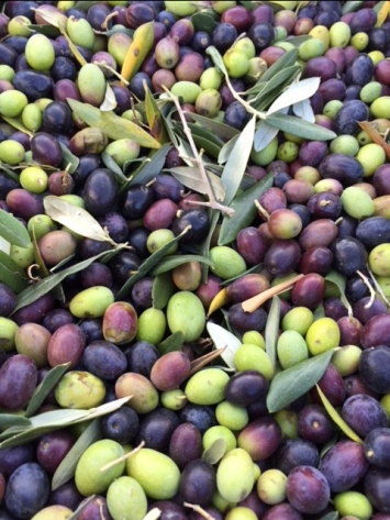 The beautiful olives.